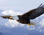 Eagle Flight : Le jeu VR d'Ubisoft se dote d'un trailer de lancement
